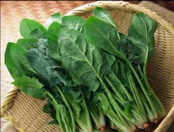 高汇:为什么1300斤菠菜只卖15元